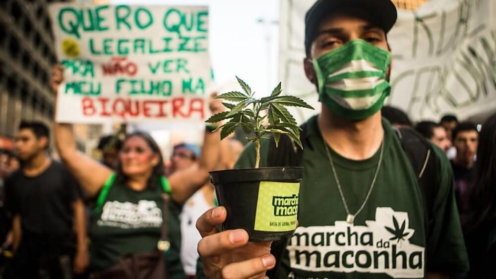 In Brazil, marijuana startups wait for a quick change in legislation.