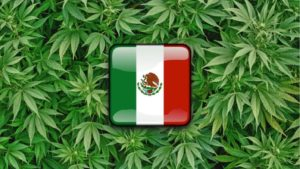 Mexico Will Be Next To Legalize Marijuana