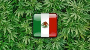 Mexico Will Be Next To Legalize Marijuana